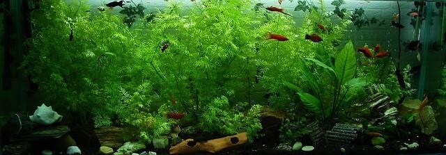 aquarium-323717_640