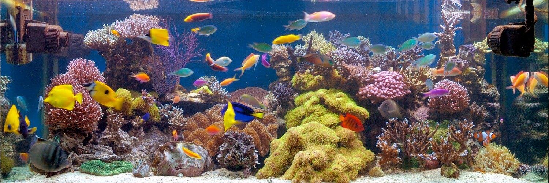 Infos Aquarium