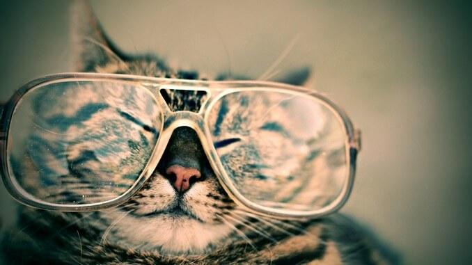 Le chat et la ronron thérapie