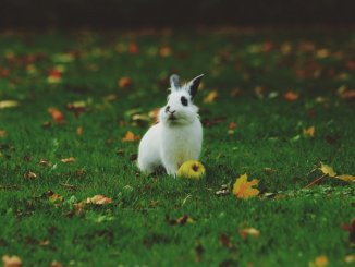 Conseils utiles pour un lapin heureux