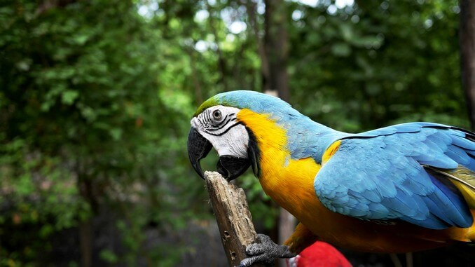 la peau du perroquet