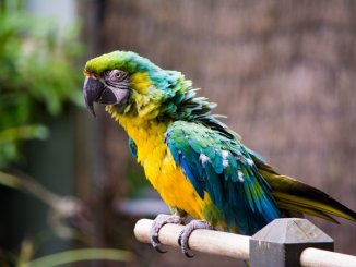 Questions, réponses sur les perroquets