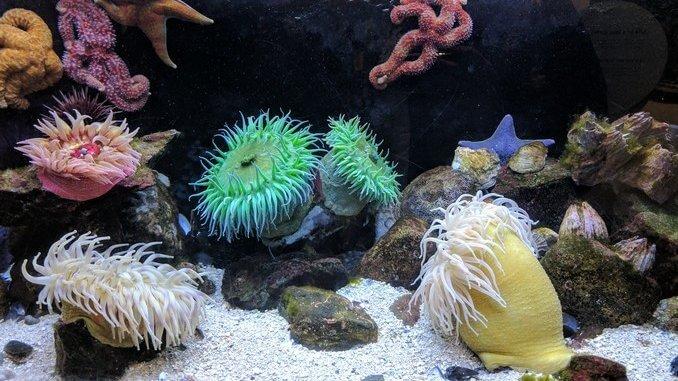 Où placer son aquarium