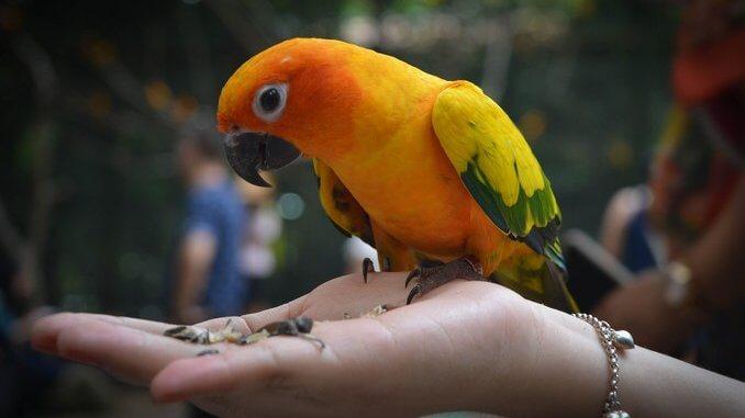 Signes pathologiques chez le perroquet