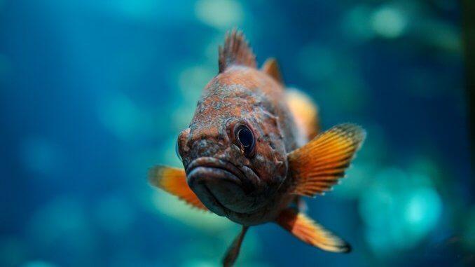 prendre une belle photo de ses poissons