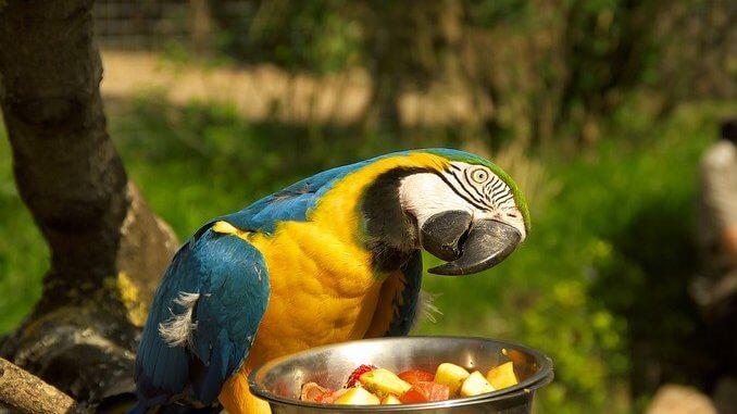 Bien nourrir son perroquet