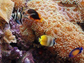 Nourriture pour poissons d'aquarium