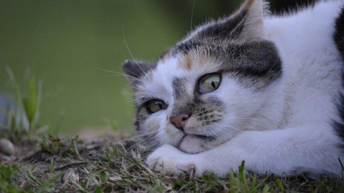 chat peur des feux d'artifice